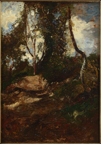 Un sous bois à Mazargues